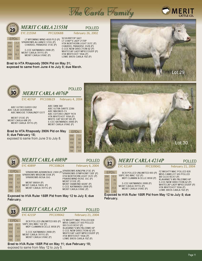 Merit Cattle Co Charolais Bred Female Dispersal Sale